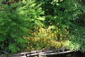 Blumengarten im frühjahr — Stockfoto