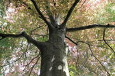 Miedź buk, drzewa góry — Zdjęcie stockowe