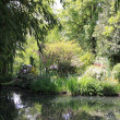 River in the garden — Stock Photo