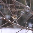 Stock Photo: Titmice, Tit