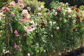 フランスの春の花の市場 — ストック写真