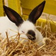 Close-up of a white rabbit farm in the straw — Stok fotoğraf