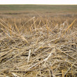 Straw on evening — Stock Photo