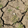 Dried up earth — Stock Photo