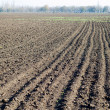 Stock Photo: Tillage