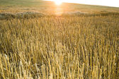 Sunsets over field — Stock Photo