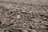 Arable soil — Stock Photo