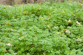 Woods grass — Stock Photo