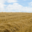 Rows of straw — Stock Photo