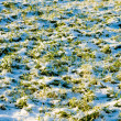 Stock Photo: Winter crops