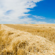 Row of straw — Stock Photo #5578607