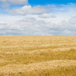 Yellow field — Stock Photo #5578622