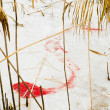 Blood on ice — Foto Stock