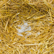 Stock Photo: Nest in straw