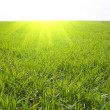 Grass and sun — Stock Photo #5579001