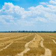 Field after harvesting — Stock Photo #5579051