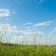 Stock Photo: Green grass and sky