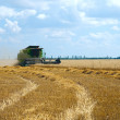 Foto de Stock  : Harvest time