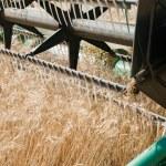 temps de récolte — Photo