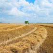 Harvest time — Stock Photo #5579401