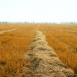 Foto Stock: To gather in harvest