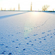 Tracks in the snow at evening — Stock Photo