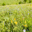 Meadow with flowers — Stock Photo