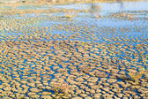 Surface of bog — Stock Photo
