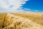 Row of straw — Stock Photo