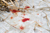 Blood on ice — Stock Photo
