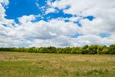Foresta e campo — Foto Stock