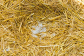Nest in straw — Stock Photo