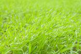 Yeşil çimen — Stok fotoğraf