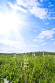 Meadow and sunny — Stockfoto