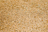 Background from grains — Stock Photo