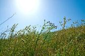 Prado verde — Foto de Stock