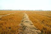 Per raccogliere il raccolto — Foto Stock