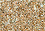 Grains with husk — Stock Photo