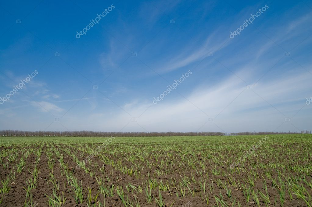 Field at spring with green shots — Stock Photo #5579132
