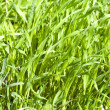 Stock Photo: Green grass as background