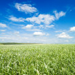 Green grass under cloudy sky — Stock Photo
