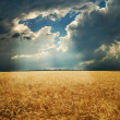 Field under dramatic sky — Stock fotografie