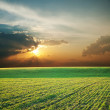 Royalty-Free Stock Photo: Green field and sunset