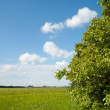 Green field near wood — Stock Photo