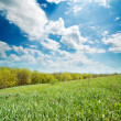 Green grass near wood — Stock Photo