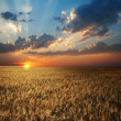 Field in sunset — Stock Photo