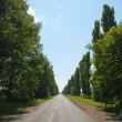 Road in tree — Stock Photo