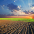 Field and sunset — Stock Photo #5586937