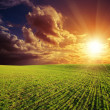 Green field and red sunset — Stock Photo