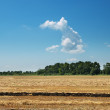 Field after harvesting — Stock Photo #5587079
